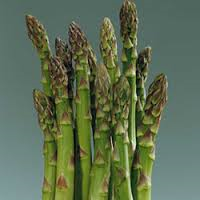 Asparagus 'Jersey Knight'